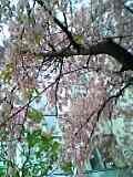 060321_1408.jpg